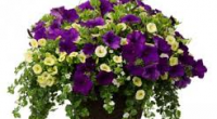 Burnaby South PAC is once again hosting the annual Hanging Basket Fundraiser. This will give you the opportunity to purchase a lovely basket in time for Mother's Day, Sunday, May […]